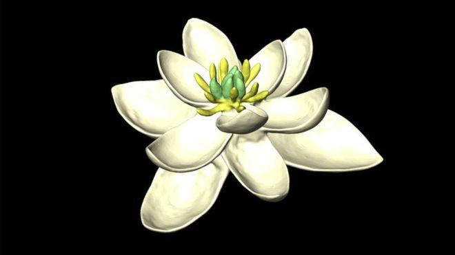 """科学家推测现存花卉""""祖先""""样貌  或存活于1.4亿年前"""