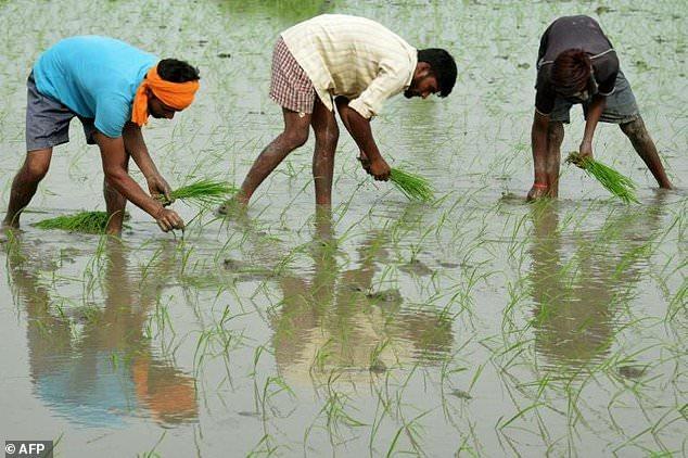 全球变暖致农作物蛋白质含量降低 或危及1.5亿生命