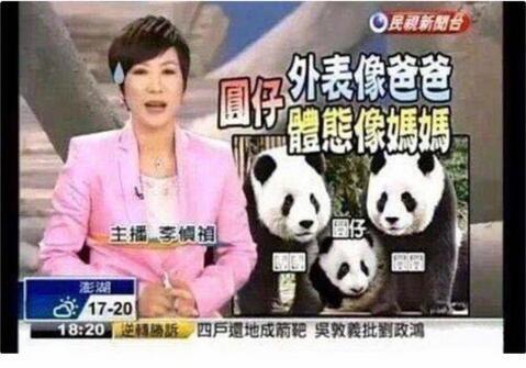 大S将熊猫比喻成女儿:发质像妈妈 瞳孔像爸爸