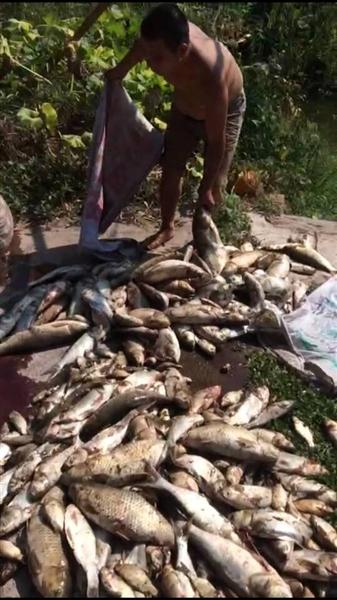 四川泸州遭热浪袭击最高温41.6℃ 蚊子被热死