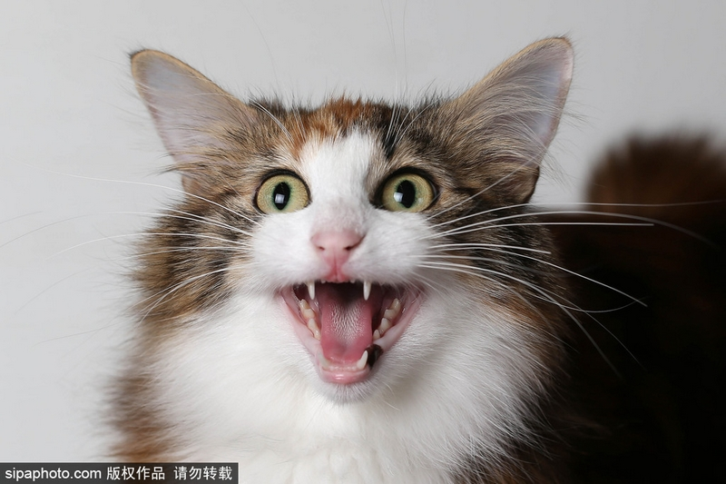 云养猫? 给猫控的吸猫福利图片