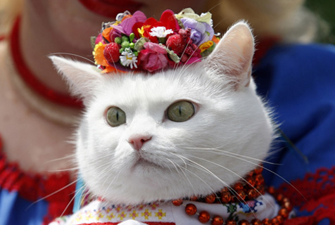 云养猫? 给猫控的吸猫福利