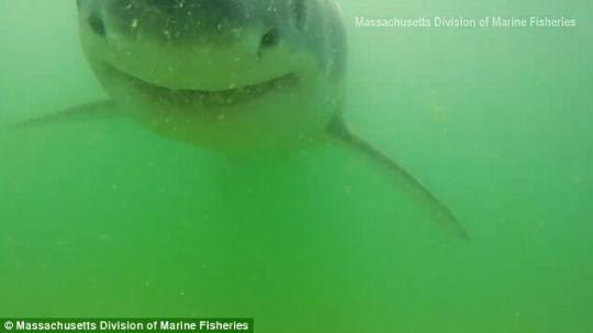 大白鲨咬到GoPro 血盆大口被拍下