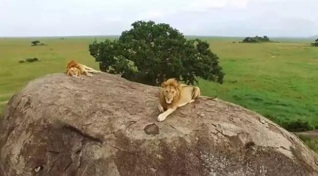 坦桑尼亚欲部署侦察无人机打击盗猎