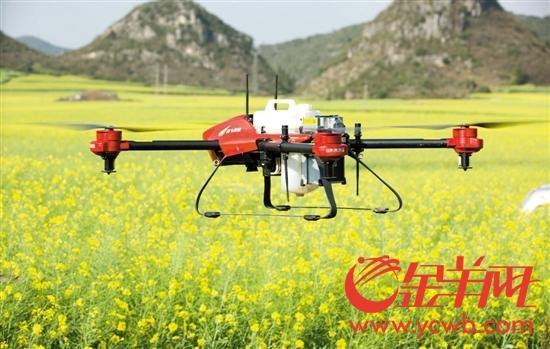 """无人机""""接手""""田间喷药 为农民提供精准打药手段"""