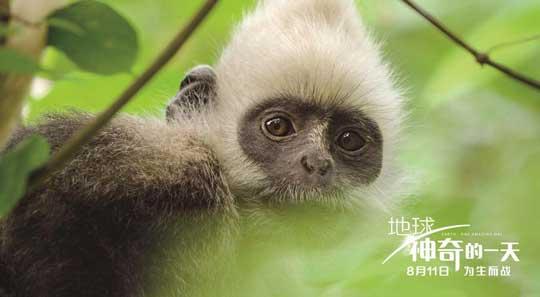 《地球:神奇的一天》特辑中国隐秘神奇动物首曝光