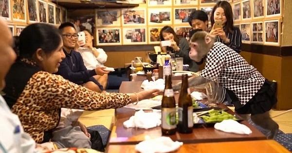"""日本一酒馆""""雇佣""""猴子当服务员 香蕉当""""工资"""""""