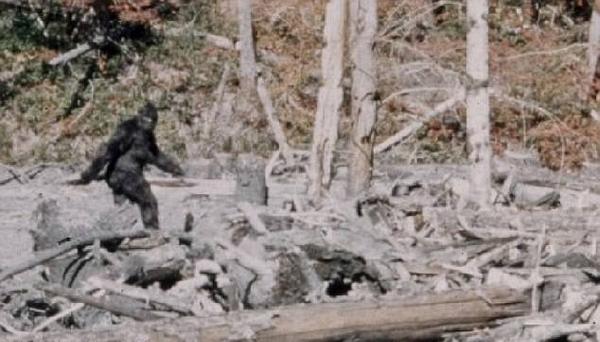美树林被曝有野人出没 警方称或为假扮勿射杀
