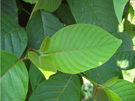 洁洛仕水桐木纤维:纯净肌肤 源于大自然最初的馈赠