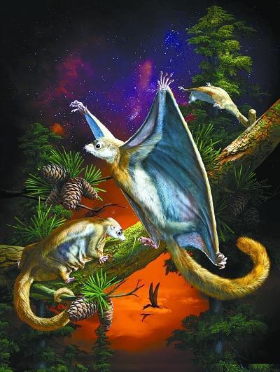 最原始的滑翔哺乳动物露真容 化石就保存在北京