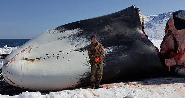阿拉斯加一男孩因捕杀鲸鱼遭死亡恐吓