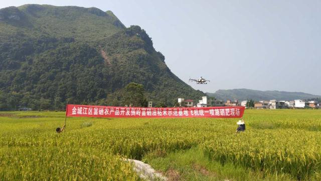 金城江首次引进无人机给稻田喷施硒肥