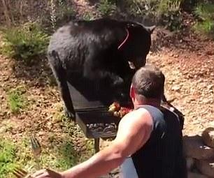 """不速之客!家庭野外烧烤遇""""馋嘴""""黑熊来捣乱"""