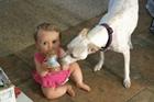 女婴与爱犬共享花生酱