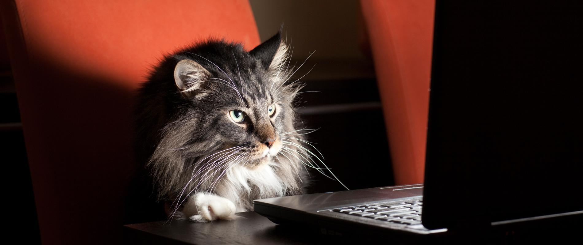 """今天你""""吸猫""""了吗?法媒揭秘风靡世界的网络新宠"""