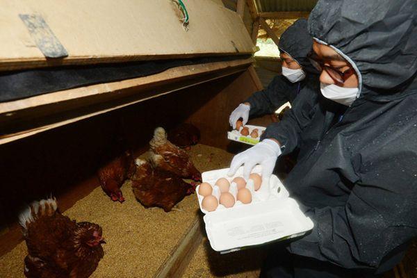 韩国鸡蛋检出杀虫剂成分 各大超市停售