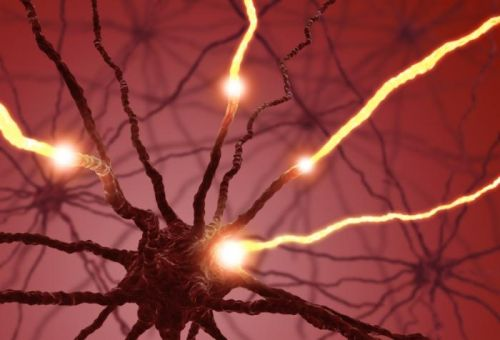 美研究:脑部血清素运转体降低将加速认知障碍