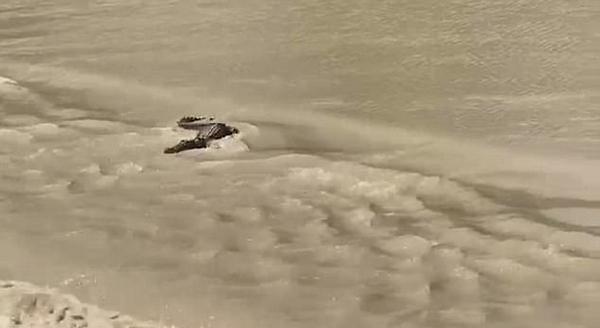 惊险!澳司机淹水路段驾车行驶被鳄鱼挡道