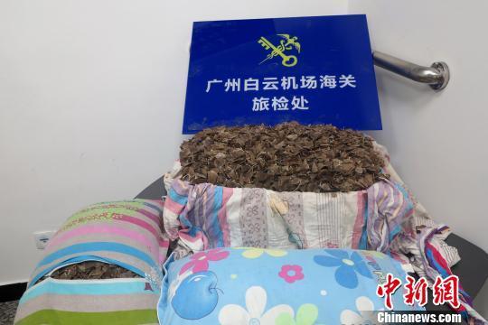 36公斤穿山甲鳞片藏在枕头、床单中被海关截获