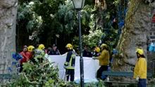 监拍葡萄牙大树倾倒瞬间致12人死亡52人受伤