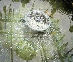 小伙捞走许愿池硬币被行拘