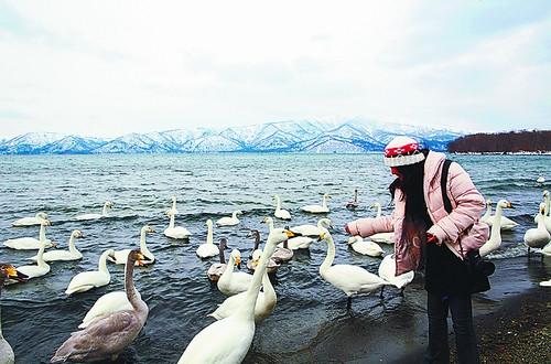 北海道自驾收获一路冬趣