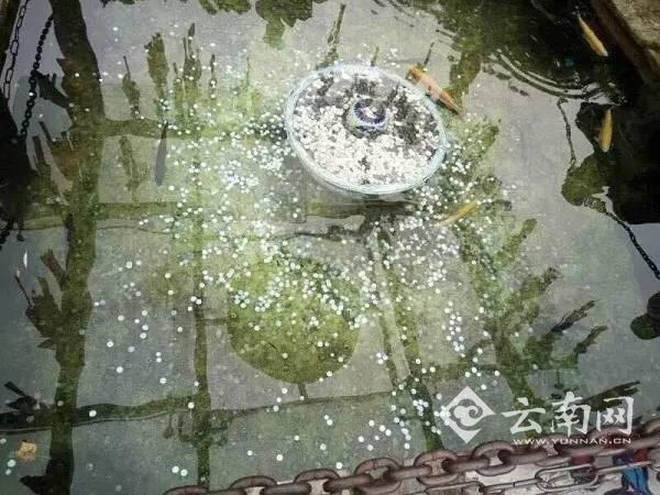 90后小伙盗窃丽江一景区许愿池7.2元硬币被拘10日