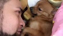 爱犬去世 男子思念成疾自杀跟随