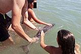 西班牙小海豚因游客拍照而亡
