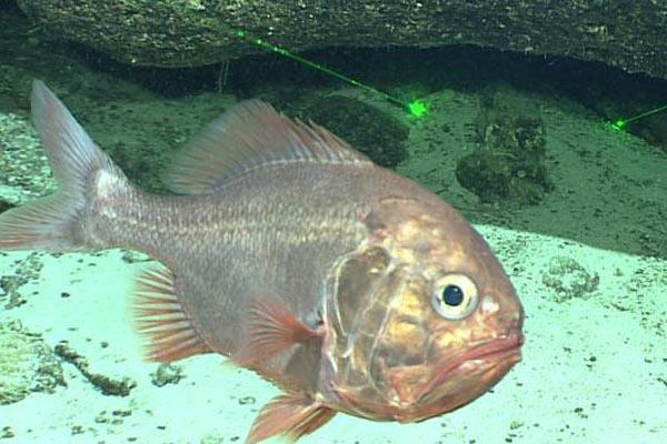 """""""发现""""号镜头下的深海生物奇观"""