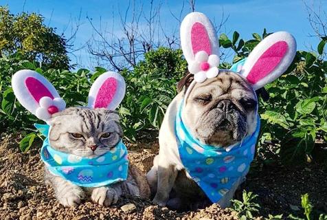 国外猫狗兄弟玩变装 可爱着装萌翻众人