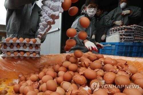 """韩食品部:已有45家蛋鸡养殖场检出""""毒鸡蛋"""""""