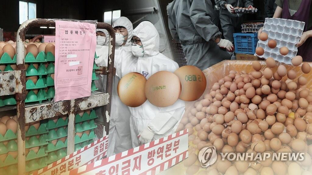 """韩食品部:共49家蛋鸡养殖场检出""""毒鸡蛋"""""""