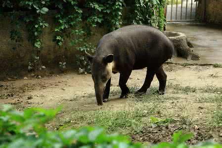 委内瑞拉一动物园动物接连失窃 疑被盗杀充饥