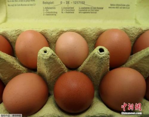 欧洲毒鸡蛋蔓延农户损失惨重 比利时拟民事索偿