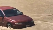 巨鳄被洪水冲上公路 听见汽车鸣笛后乖乖离开