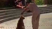 男子以训练狗名义 拖鞋狂扇宠物狗