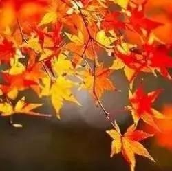入秋三分虚!秋天养好这三段,平平安安到冬天!