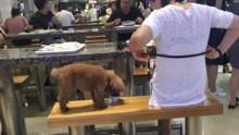 男女用公共餐具喂狗商场:有规定宠物禁入