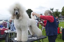 英国举办狗狗展览 各萌犬争相亮相