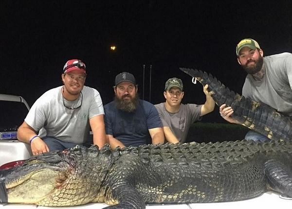 美狩猎者经3小时殊死搏斗捕获3.4米长巨鳄