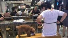 女子用公共餐具喂狗喝奶茶 网友:无社会公德