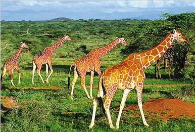 南北半球季节相反 躲避高温去非洲寻清凉