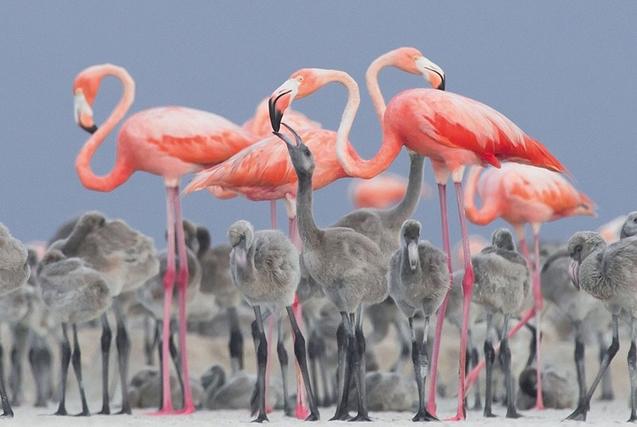 2017年鸟类摄影大赛冠军作品揭晓
