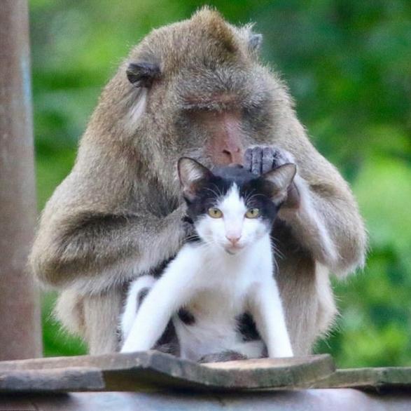 泰猕猴和小猫成好友形影不离 画面甜蜜有爱