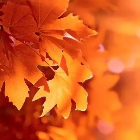 秋燥秋乏秋愁如何解?教你一招,神清气爽应对三秋症!