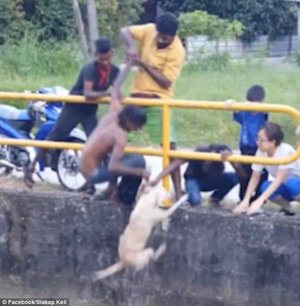 马来男子勇救落水狗 机智果敢受称赞