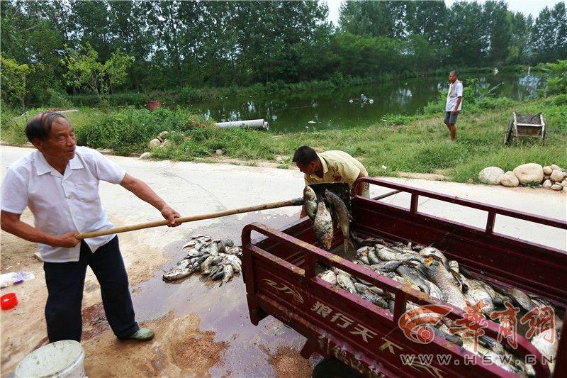 村民1万斤鱼一夜之间蹊跷翻塘