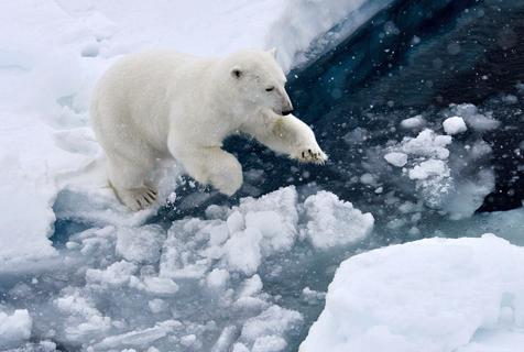 实拍北极熊玩浮冰 纯白呆萌惹人爱