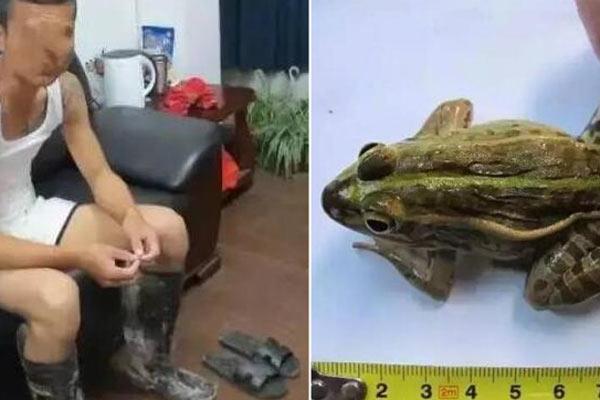 男子为改善伙食抓了一只蛙 或被判3年刑